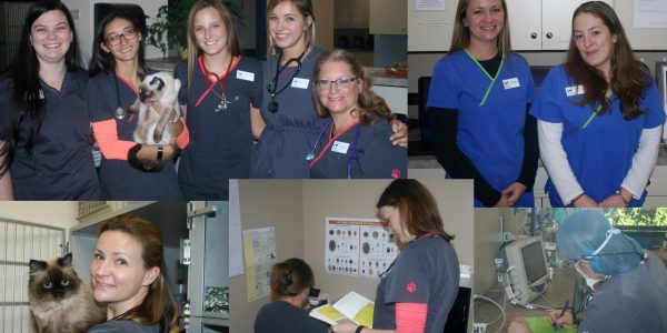 National Vet Tech Week