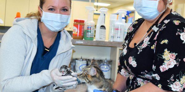 Belle and her Newborn Kitten