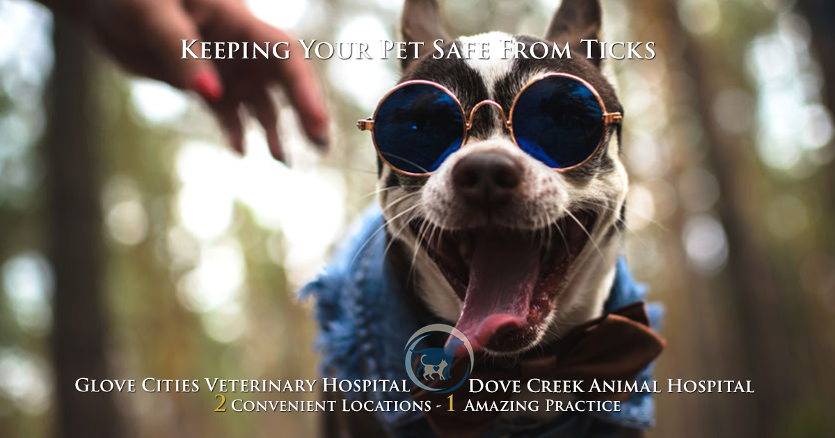 Protect Your Pet From Ticks!