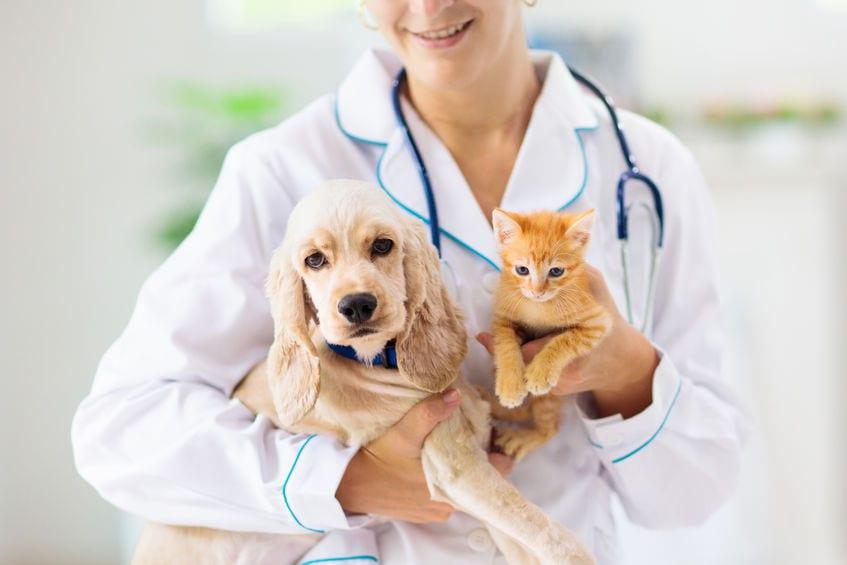 Pets at Vet
