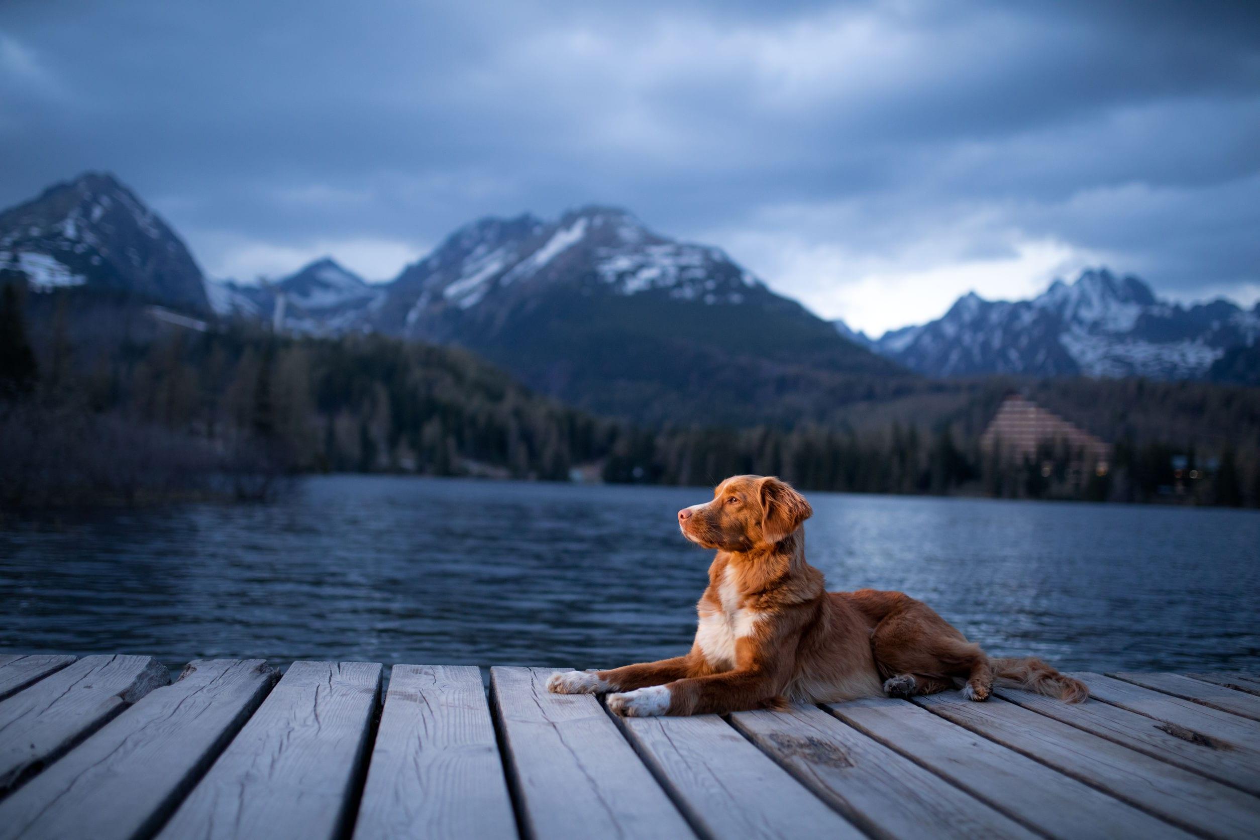 Dog at the lake