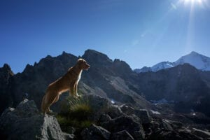 Hiking with your pet this summer
