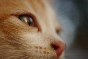 feline certified
